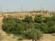 Jaisalmer Wind Park (India)